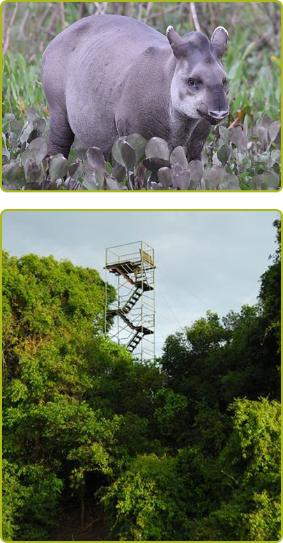Tapir and Observation Tower